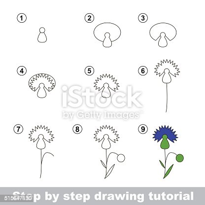 Drawing Tutorial How To Draw A Cornflower Stock Vector Art