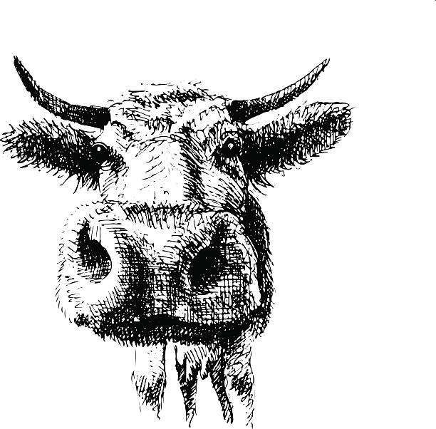 Drawing_cow vector art illustration