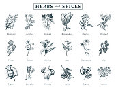 Drawn herbs and spices vector set. Botanical illustrations of organic, eco plants. Used for farm sticker,shop label etc.
