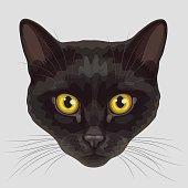 Drawn muzzle of black cat