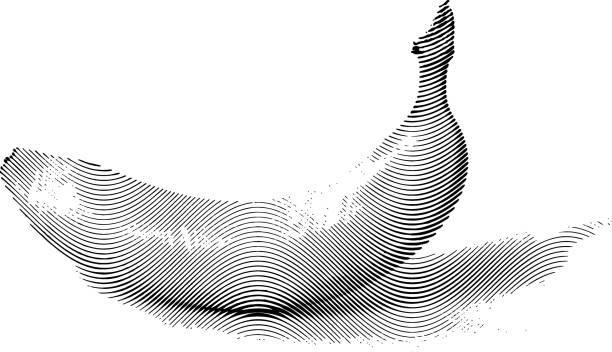 Gezeichnet Skizze Malerei Malerei Banane – Vektorgrafik