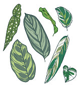 Drawn vector art collection with different exotic houseplant leaves like Monstera, Calathea, or Anthurium