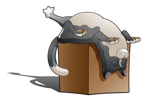 Dreamer cat