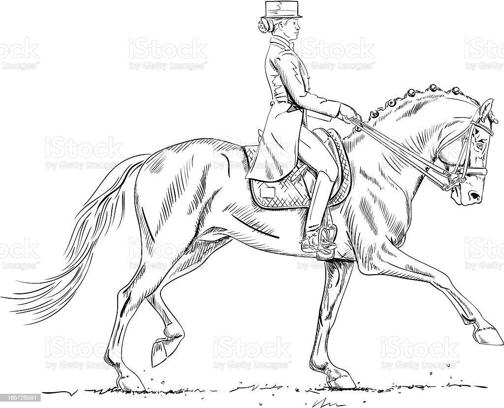 dressage cavalo e rider desenho buscar alargada download