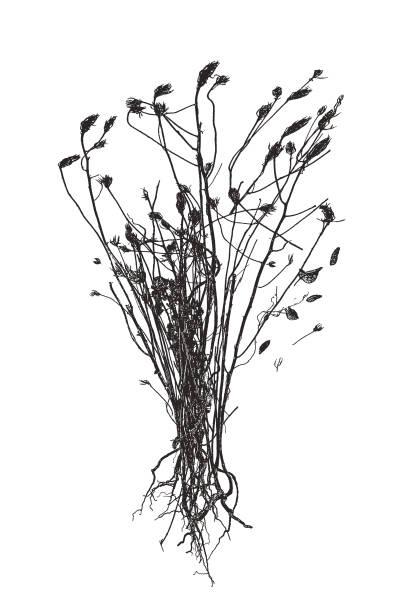 ilustrações de stock, clip art, desenhos animados e ícones de dried, dead flowers - planta morta