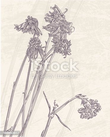 An antique-styled drawing of some dead, dried flowers.