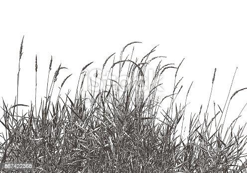 Silhouette illustration of dried ornamental grass around an autumn wetland