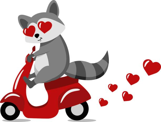Driving with love. Creative  concept holiday valentines day vector illustration funny delivery shipping racoon driving old retro vintage scooter bike with love hearts. animal valentine stock illustrations