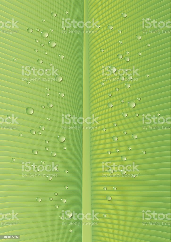 Drops on Green Leaf royalty-free stock vector art