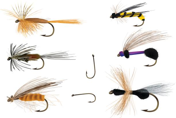 Dry flies on and with fishing hooks Fly fishing bait. fishing bait stock illustrations