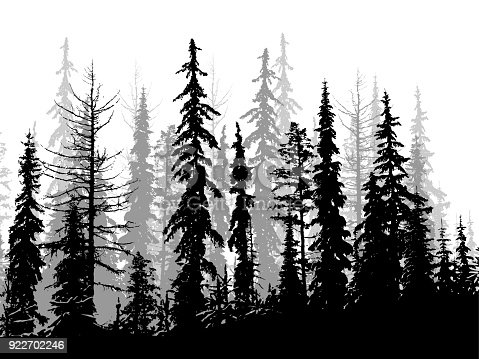 Pine trees in the wilderness