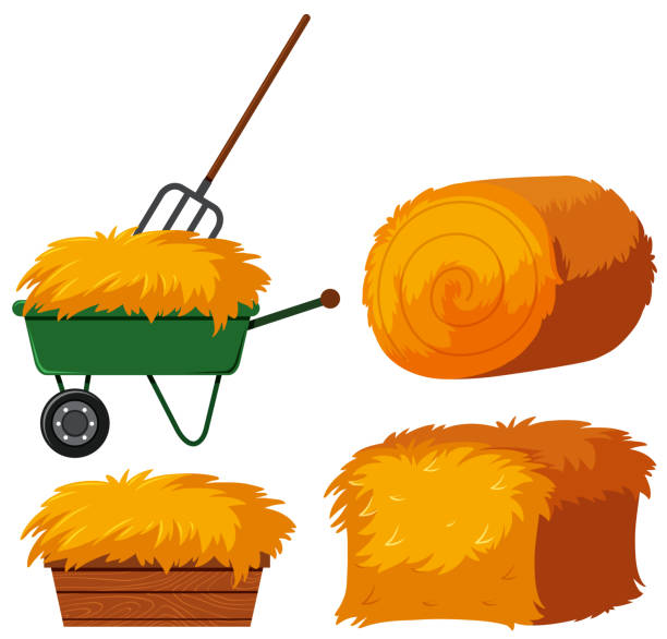 Dry hay in bucket and wagon Dry hay in bucket and wagon illustration hay stock illustrations