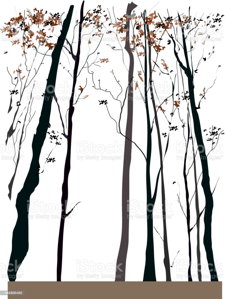 Dry tall trees vector art illustration