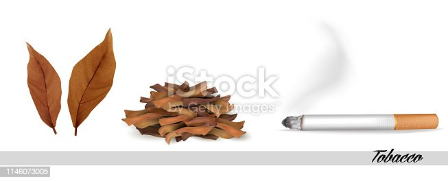 Dry tobacco leaves with cigarette. Vector