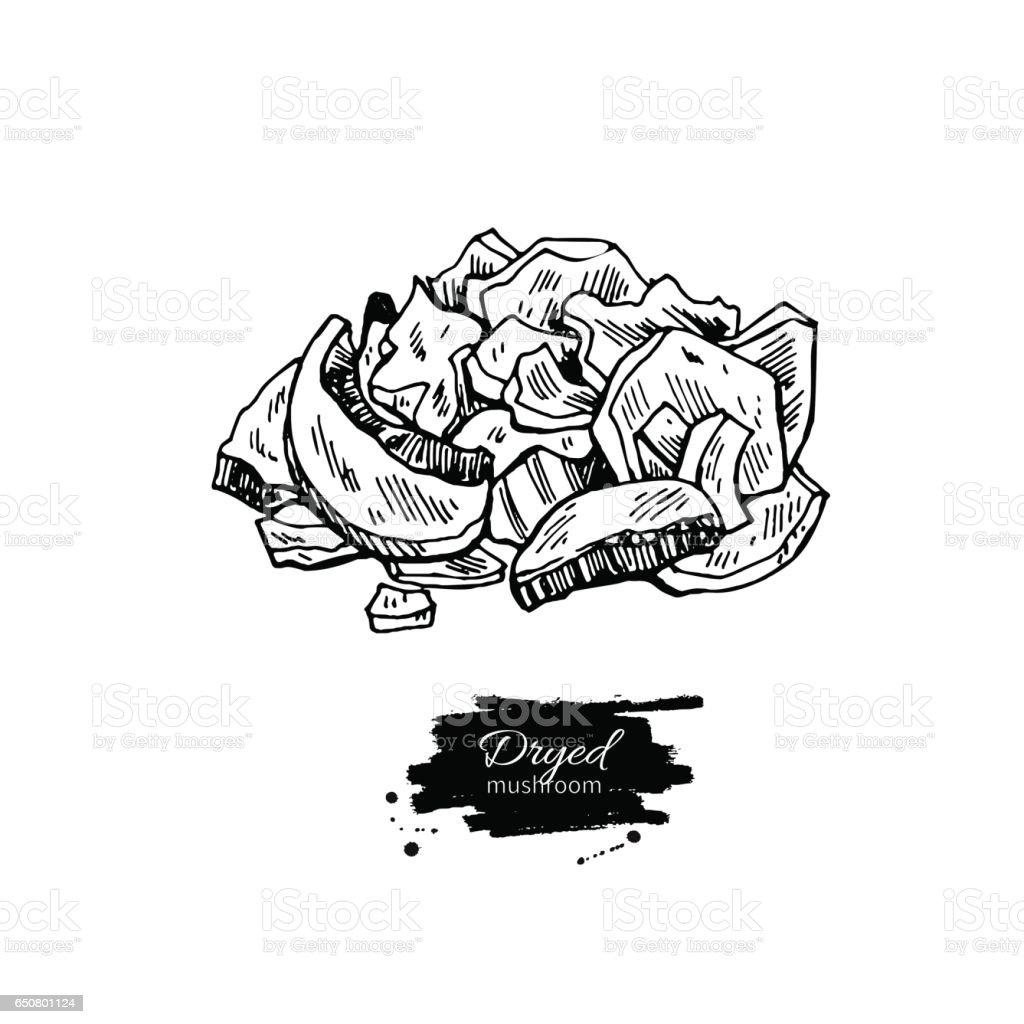 Dryed Pilz Handgezeichneten Vektorillustration Skizze Kuche Zeichnen