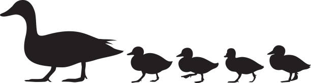 Duck and Ducklings Silhouette Vector silhouette of a group of ducks and ducklings walking. duckling stock illustrations