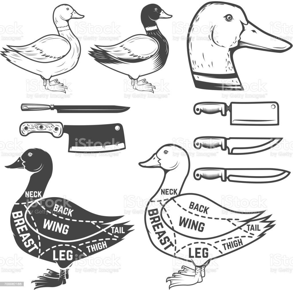 Ilustración de Pato Del Carnicero Diagrama Elemento De Diseño Para ...