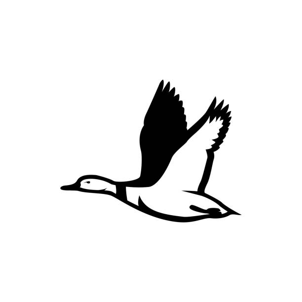 duck fly silhouette duck fly silhouette vector loon bird stock illustrations
