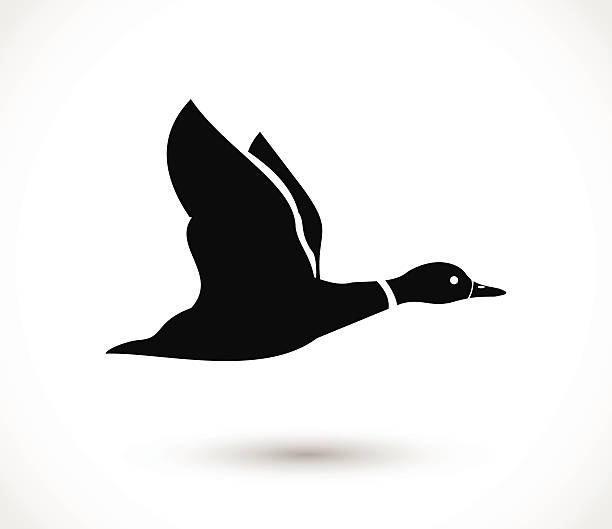 Duck flying icon, duck hunt vector Duck flying icon, duck hunt  - simple vector illustration isolated on white background drake male duck stock illustrations