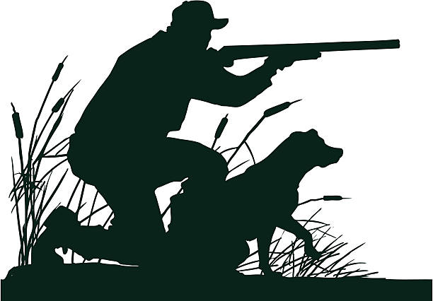 Duck Hunter with Retrieving Dog Silhouette A silhouette of a duck hunter poised to shoot with his retrieving dog ready to retrieve his quarry. bird hunting stock illustrations
