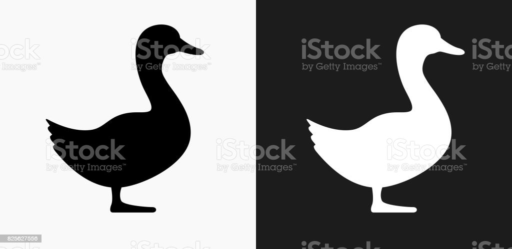 Duck Icon on Black and White Vector Backgrounds vector art illustration