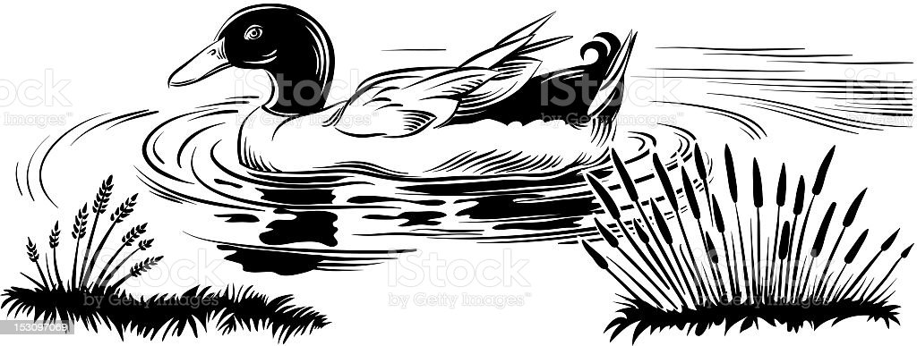 duck in the pond royalty-free stock vector art