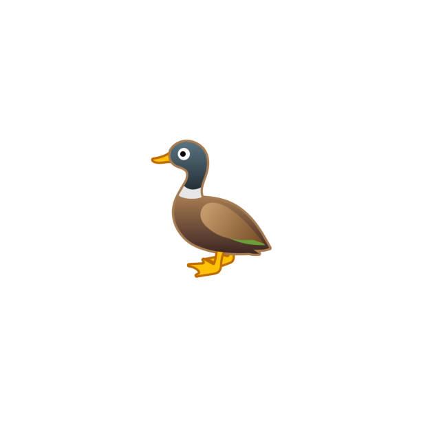 Duck Isolated Realistic Vector Icon. Mallard Duck Illustration Emoji, Emoticon, Sticker Icon Duck Isolated Realistic Vector Icon. Mallard Duck Illustration Emoji, Emoticon, Sticker Icon duck stock illustrations