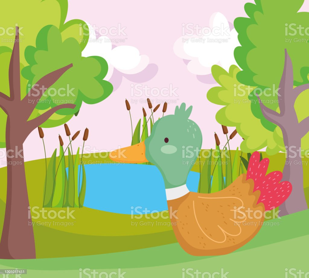 Duck Lake Plants Greenery Trees Farm Animal Cartoon Stock Illustration Download Image Now Istock Green landscape with trees clouds flowers. duck lake plants greenery trees farm animal cartoon stock illustration download image now istock