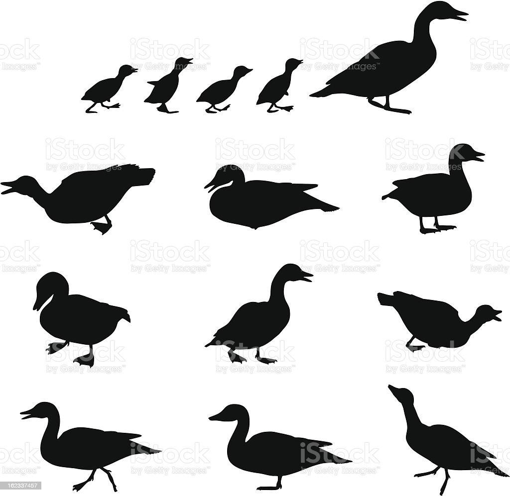 Duck on Land vector art illustration