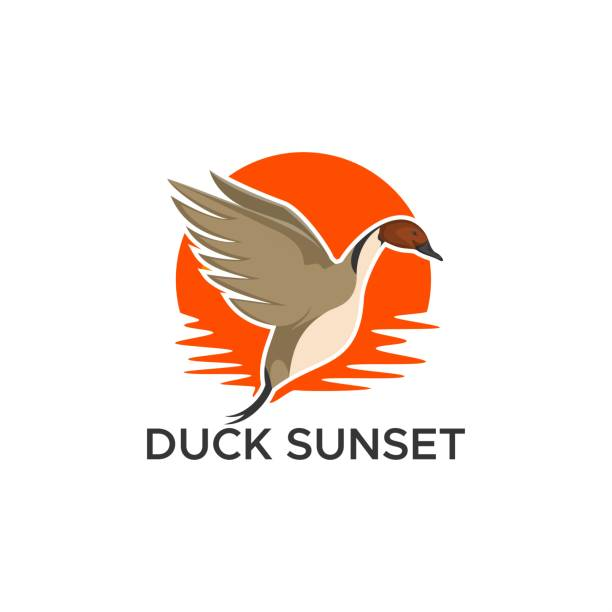 duck pintail sunset vector design illustration duck pintail sunset vector design illustration for your company or brand ducking stock illustrations