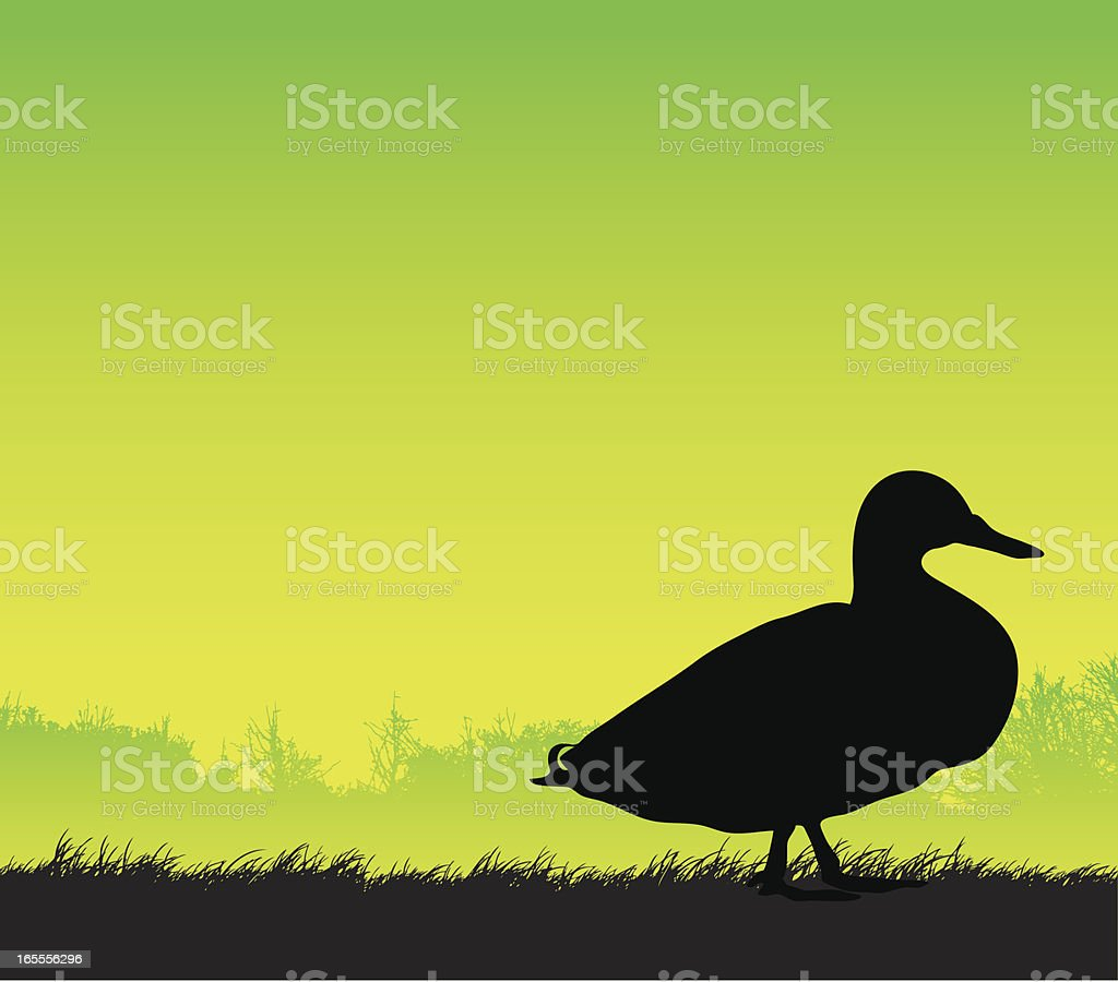 Duck silhouette side view royalty-free stock vector art