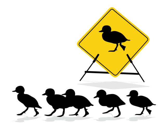 Duckling Crossing Sign duckling crossing the road with funny warning sign duckling stock illustrations