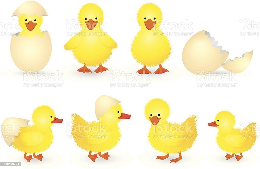 Duckling vector art illustration