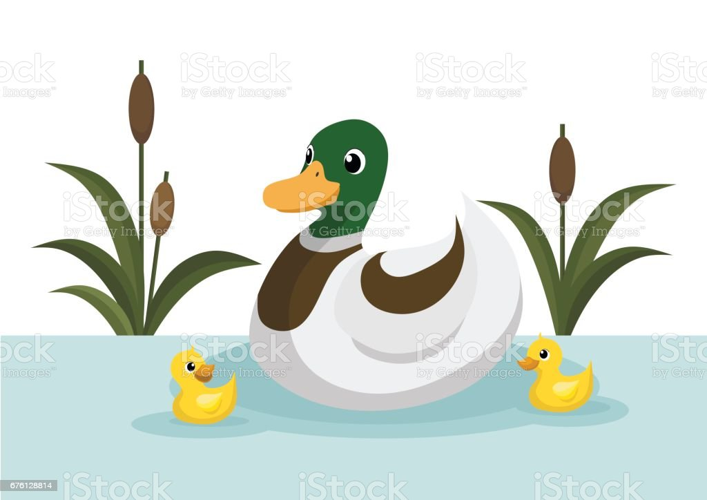 Ducks And Duckling Swim In The Pond Stock Illustration ...