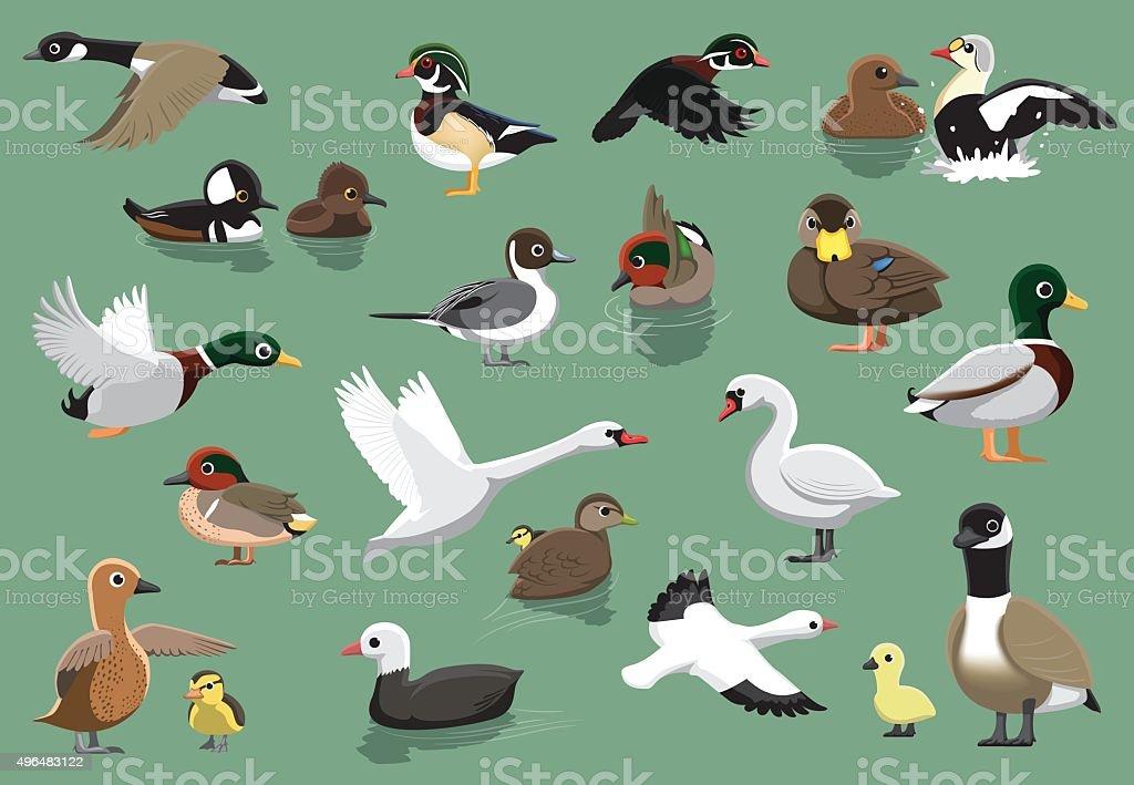 US Ducks Cartoon Vector Illustration vector art illustration