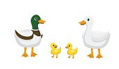 Ducks, Different kind of ducks. Isolated Vector