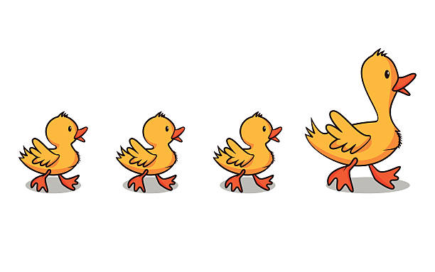 Ducks in a row Ducks in a row, vector illustration, happy family, cartoon character, isolated, white background duck stock illustrations