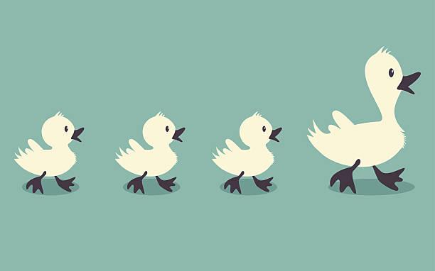 Ducks Three little ducks follow one big duck, retro style vector illustration duck bird stock illustrations