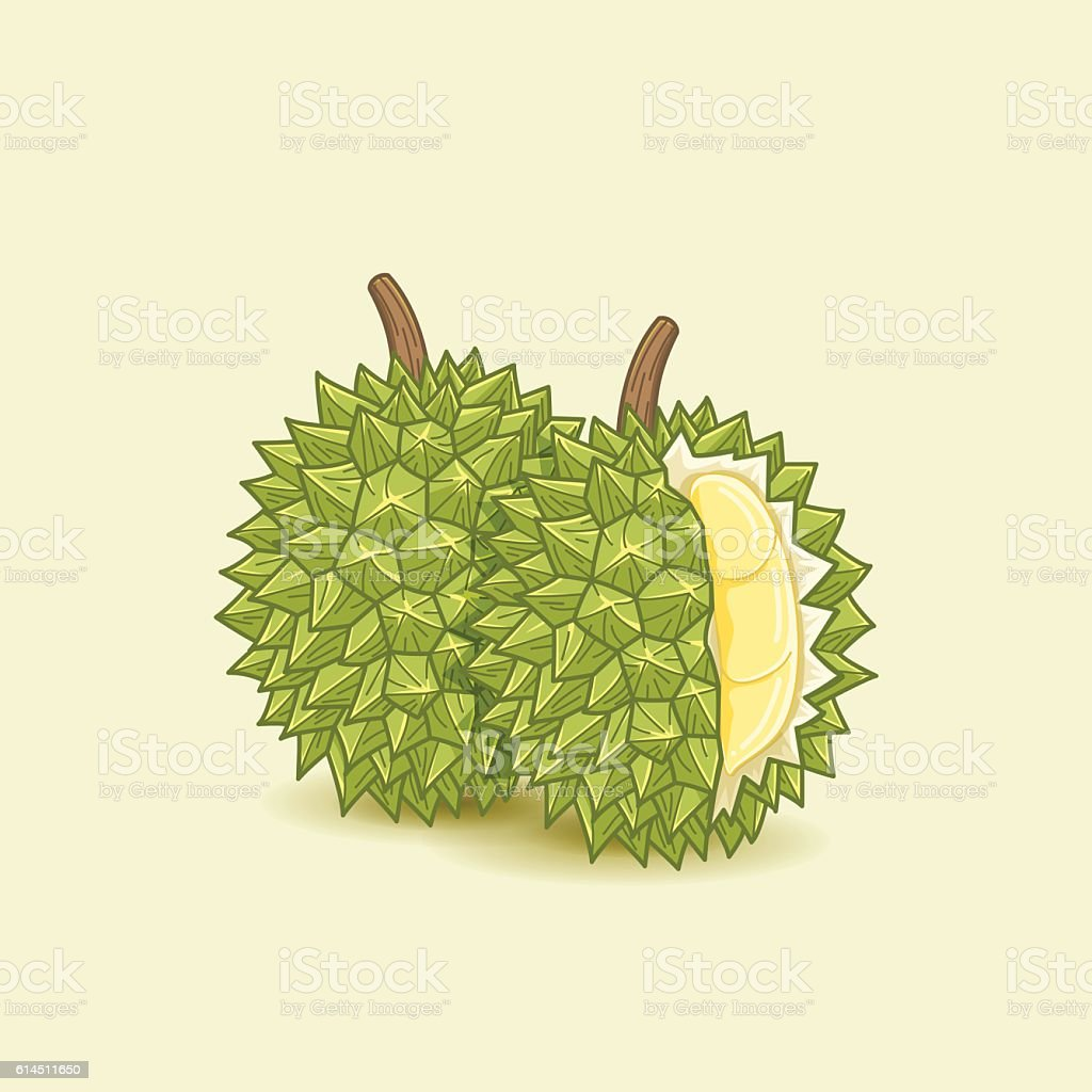 Durian Exotic Fruit vector art illustration