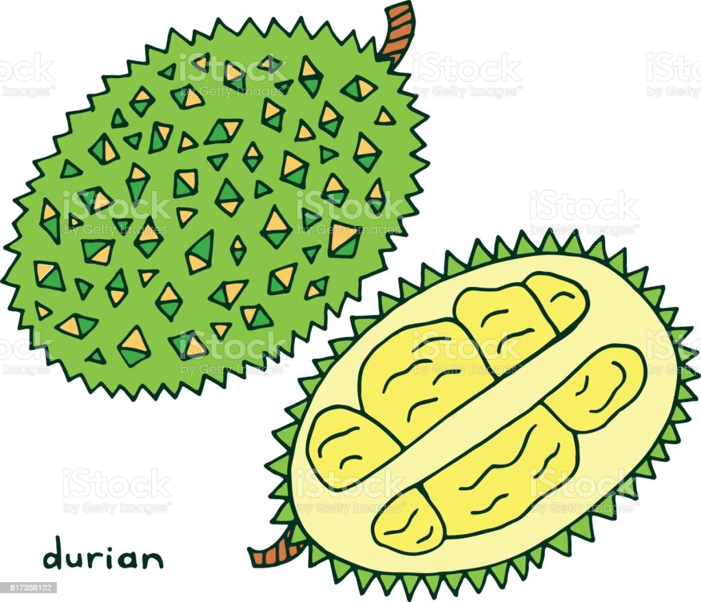 durian fruit coloring page graphic vector colorful doodle art for