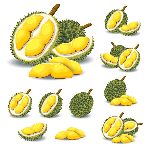 1 483 durian illustrations royalty free vector graphics clip art istock https www istockphoto com illustrations durian