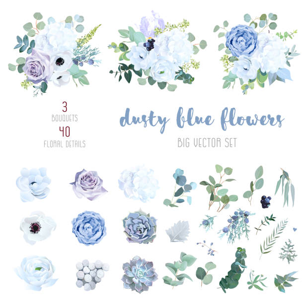 Dusty blue, pale purple rose, white hydrangea, ranunculus Dusty blue, pale purple rose, white hydrangea, ranunculus, iris, echeveria succulent, flowers,greenery and eucalyptus,berry, juniper big vector set.Trendy pastel color collection.Isolated and editable lavender plant stock illustrations