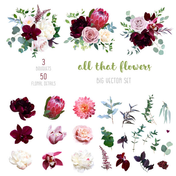 stockillustraties, clipart, cartoons en iconen met stoffige roze en romige rose, koraal dahlia, bourgondië en witte pioen bloemen - dahlia