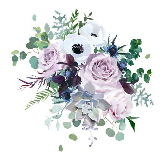 Dusty violet lavender, mauve antique rose, purple pale flowers Dusty violet lavender, mauve antique rose, purple pale flowers,brunia, white anemone, succulent vector design wedding bouquet. Eucalyptus, greenery.Floral pastel watercolor style.Isolated and editable violet flower stock illustrations