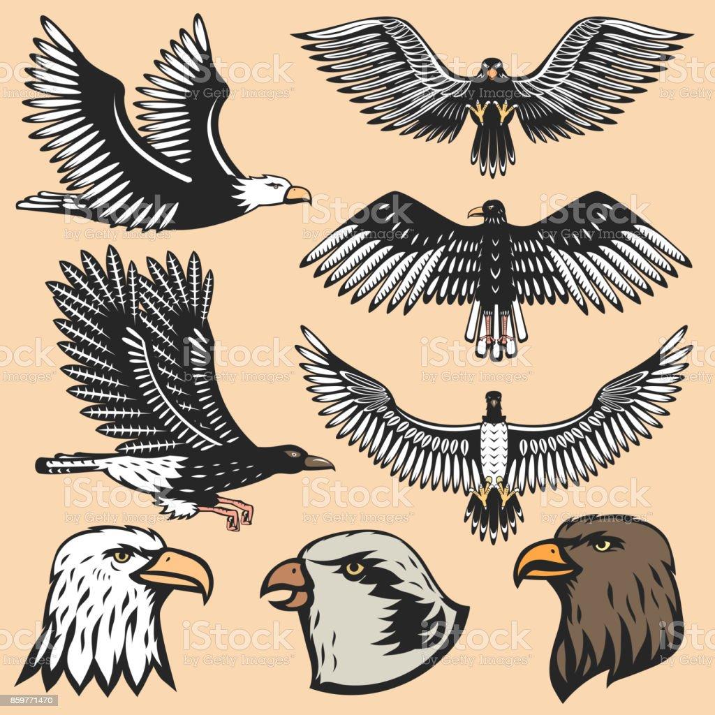 Eagle vector animal head predator silhouette illustration. Abstract...