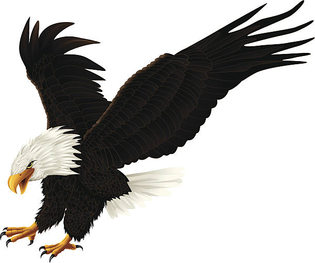 Eagle drawing on white background vector art illustration