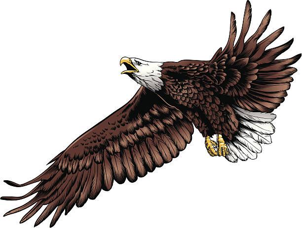 Eagle Flight vector art illustration