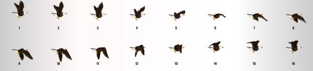 ilustrações, clipart, desenhos animados e ícones de sequência de animação voadora eagle, folha sprite de animação de loop - ícones de design planar