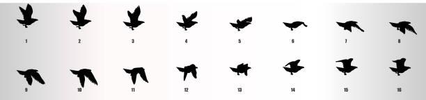 ilustrações, clipart, desenhos animados e ícones de silhueta de seqüência de animação voadora águia, folha de sprite animação loop - ícones de design planar