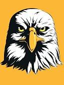 Eagle Head Vector - Front View Cartoon